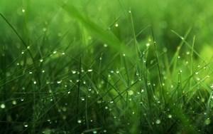6857933-grass-background