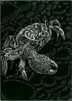 crabfortimber