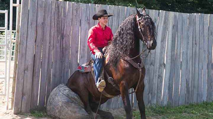 Ranch horse for sale at Congress Sale