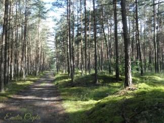 las i światło-sign