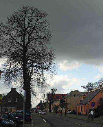 ulica i drzewo