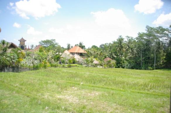 imgp0132 - Indonezja, cz. II Bali, Ubud