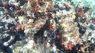 snorkelling5 - Kolumbia - Cartagena de Indias, Isla Mucura