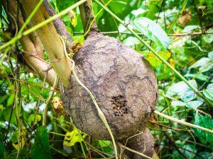 20181104  B040931 300x225 - Amazońska dżungla w Peru