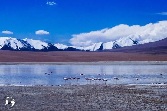20190219  2191351 - Salar de Uyuni, czyli nasze spełnienie marzeń