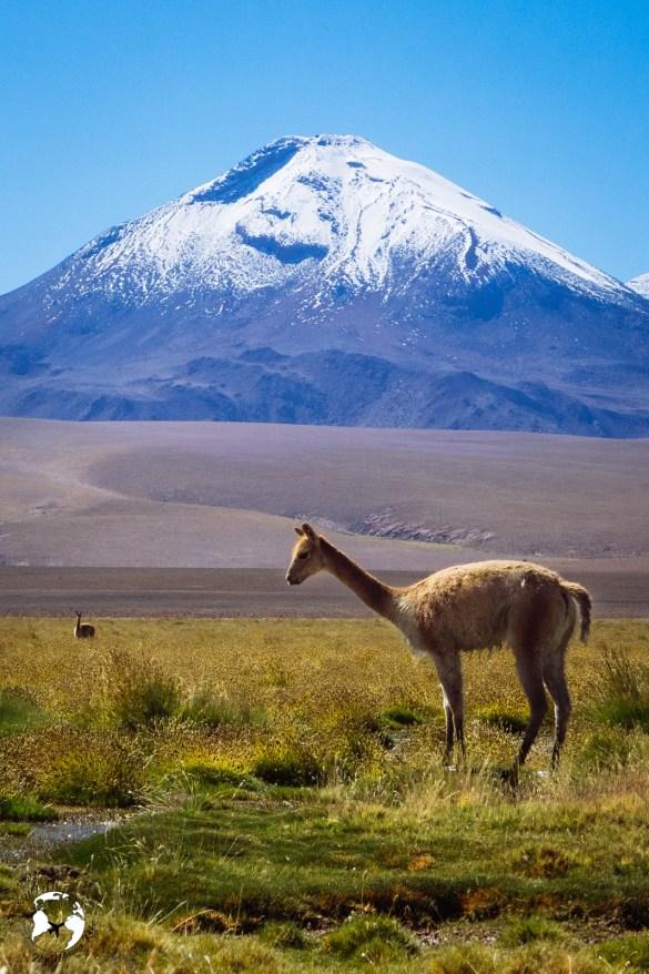 WhatsApp Image 2019 05 28 at 12.42.49 2 - Pustynia Atacama - gotowy plan i koszty podróży
