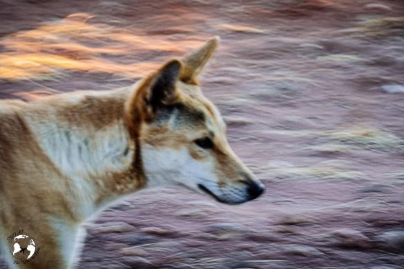 WhatsApp Image 2019 06 11 at 15.59.44 1 - W sercu australijskiego kontynentu - z wizytą na Outbacku!