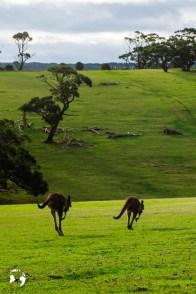 WhatsApp Image 2019 06 13 at 23.04.59 - Jakie zwierzęta możesz spotkać w Australii?