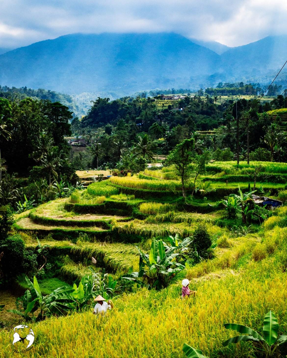 WhatsApp Image 2019 08 16 at 13.39.57 - Bali - gdzie pojechać, żeby się nie rozczarować?