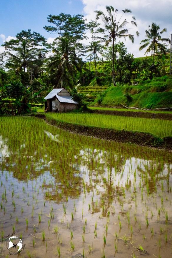 WhatsApp Image 2019 08 16 at 13.40.00 2 - Bali - gdzie pojechać, żeby się nie rozczarować?