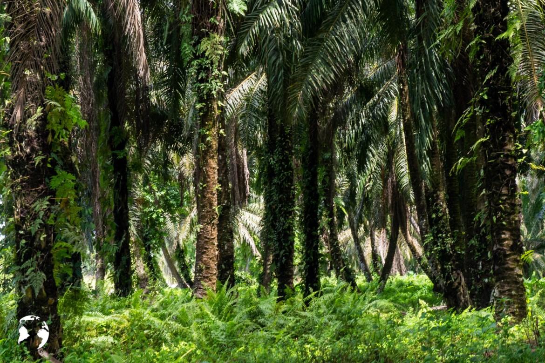 Sandakan 4 - Borneo na własną rękę - koszty