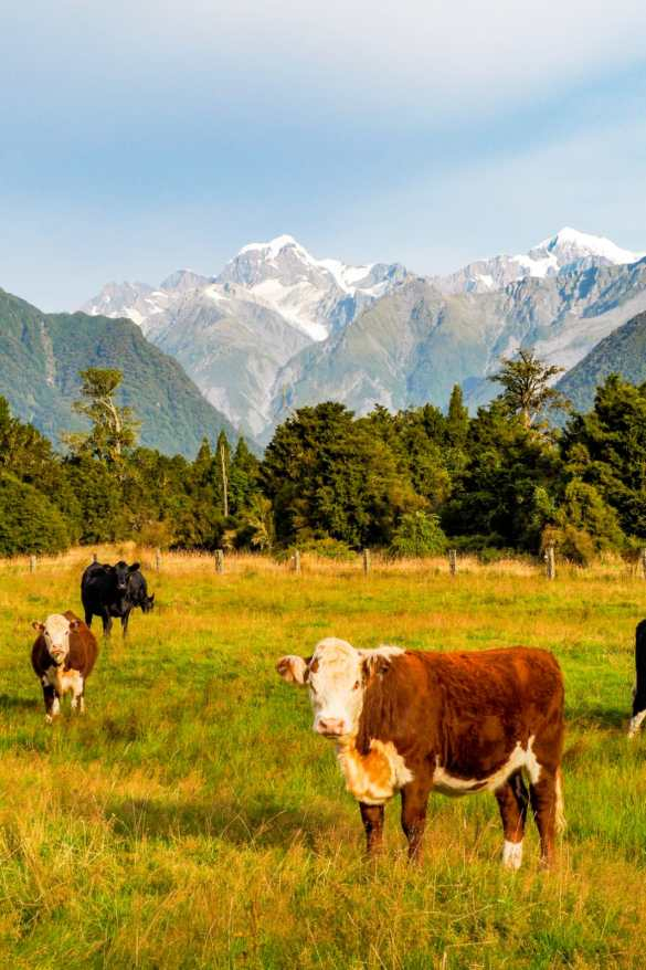 Nowa Zelandia Mount Cook - 3 tygodnie w Nowej Zelandii - plan trasy