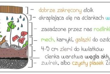 ekosystemwsloiku