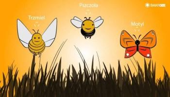 Nie Tylko Pszczoly Zapylaja Kwiaty Swiatoze Pl