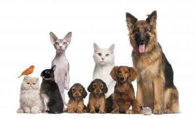 Pet Sitting Software 6