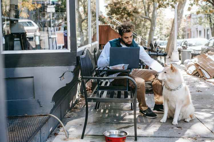 black man working with laptop and patting cute akita inu