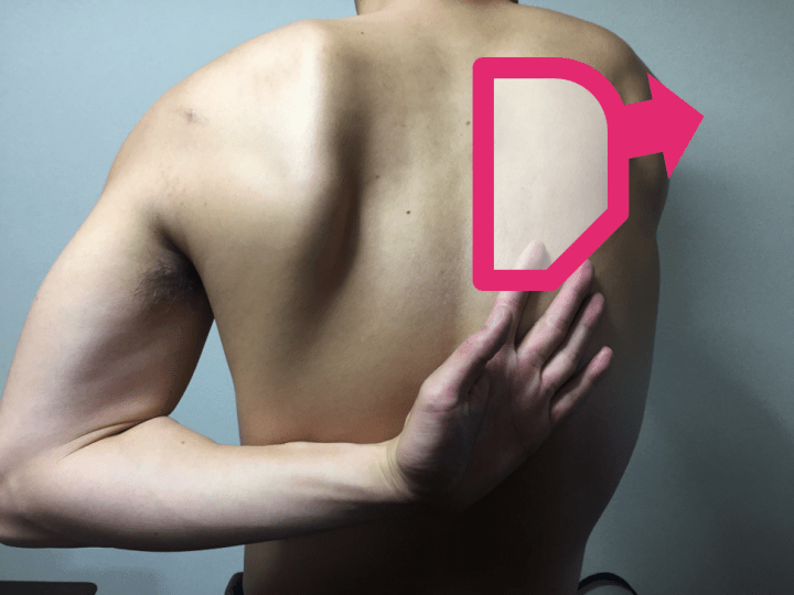 肩甲骨を伸ばす動き解説付き