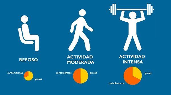 Eficiencia metabolica