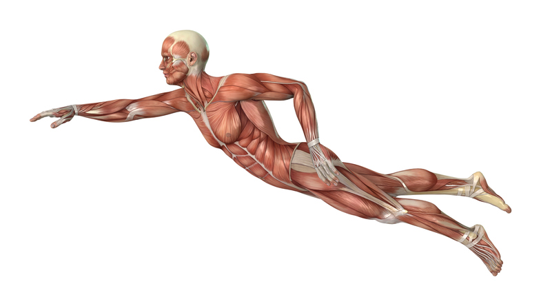 3D rendering male swimmer with muscle maps on white