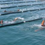 swimmers 2014