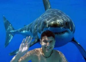 Sharks and Minnows- GULP!