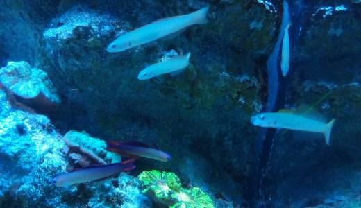 水族館は水泳のイメージトレーニングに最適!スイマーのスランプ打破に行かれてみては?