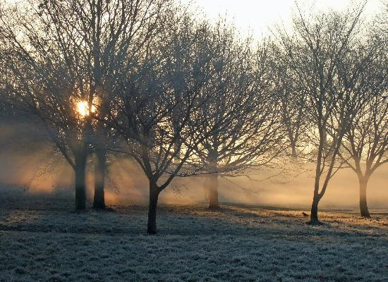 Foggy Fall Wallpaper Surprised By Beauty Frosty Mornings Swimming The Depths
