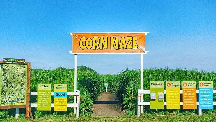 Cornmaze-fall-team-bonding-spooky-season