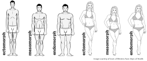 different body types - Foto: WoS
