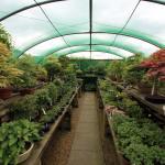 Windybank Bonsai Nursery