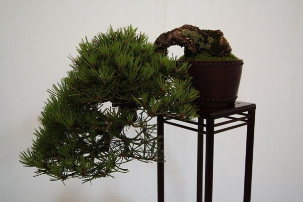Pine Exmouth Show 2011