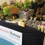 Wattston bonsai