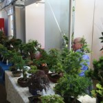 Clive McIntyre of The Bonsai Centre