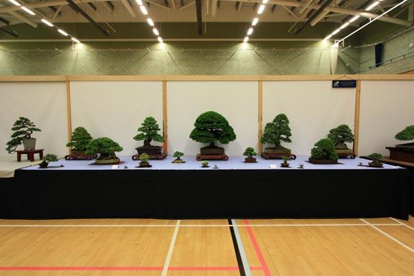 Swindon Society at Bonsai World 2011