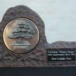 Best Conifer award