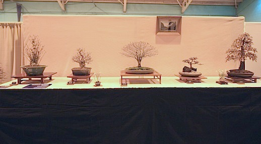 Newbury and District Bonsai Society