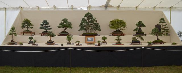 Newbury Bonsai Society