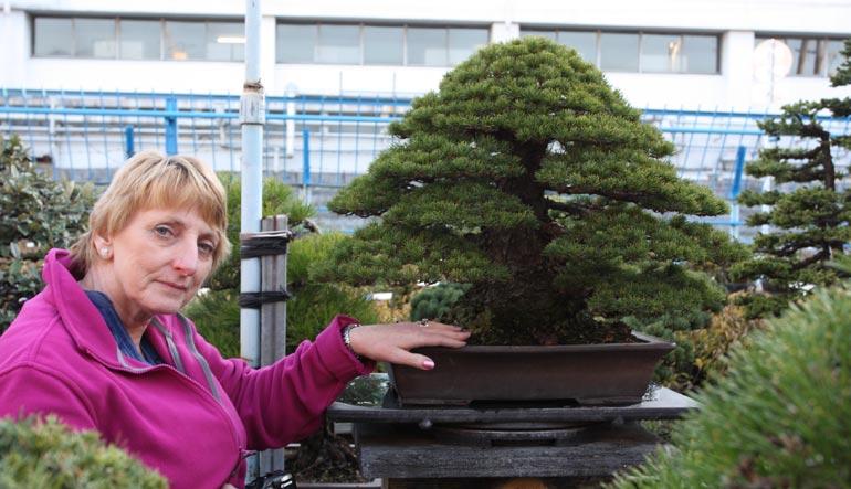 RC + Japanese White Pine Nov 2012