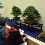 Public at 33rd Taikan-ten bonsai exhibition in Kyoto