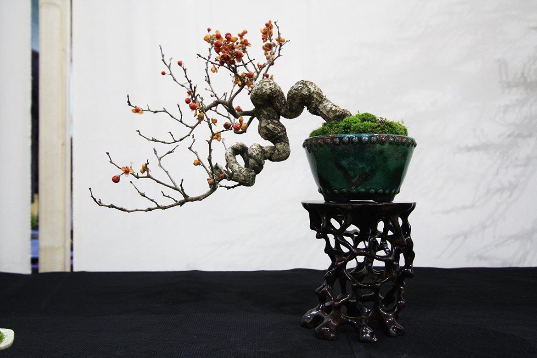 Best Tree & Pot Combo