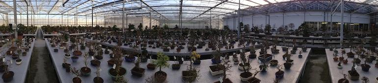 Panoramic of bonsai