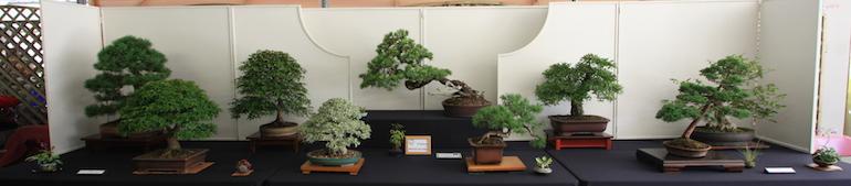 Chiltern Bonsai Society display