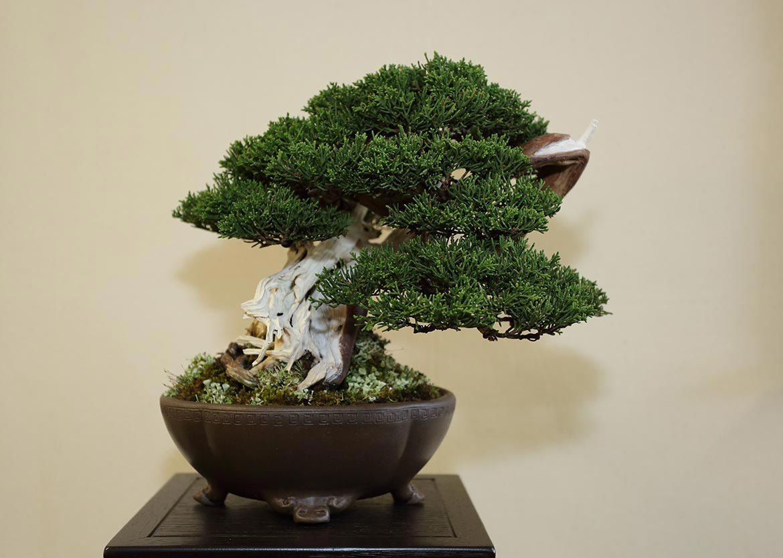 Best Chuhin Award (individual-tree) Steve Tolley