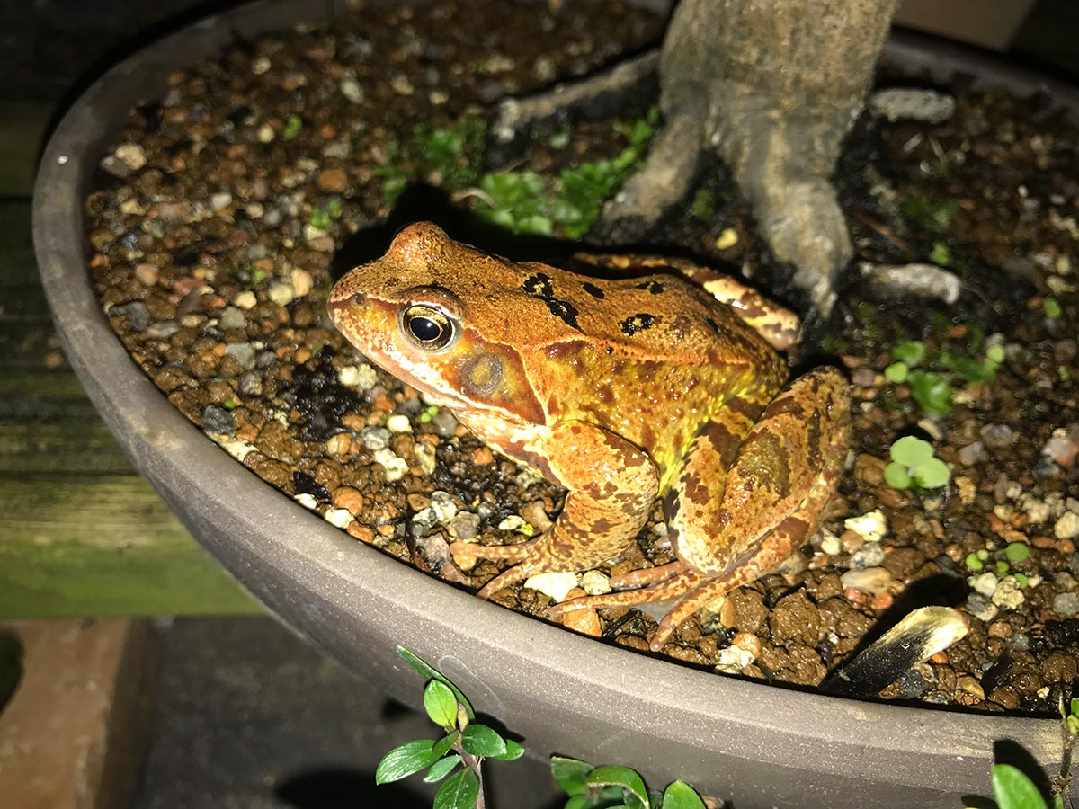 A frog on a bonsai at night