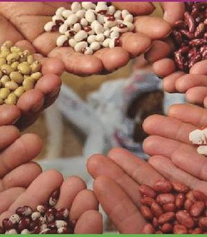 Incredible edible seed swap 2018 - seeds