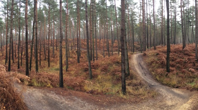 Places to Ride: Swinley Forest's Best Bits