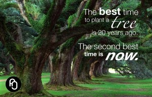 the best time to plant a tree is 20 years ago