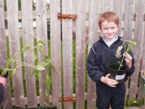 Swinford national school 5th green flag