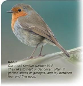 Robin. Bird watch Ireland survey