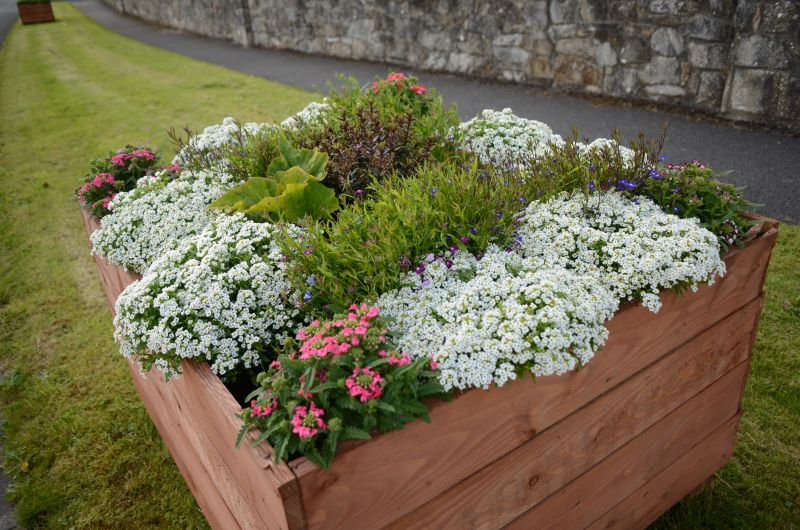 Kiltimagh road planters MAY_6583